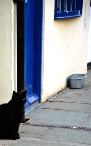 One eyed cat gaurding the entrance to arguments yard in Whitby