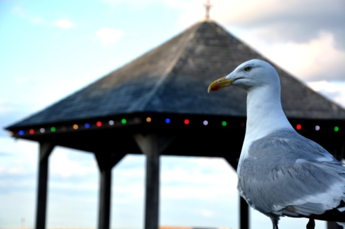 Seagull infront of the pavillion in Whitby
